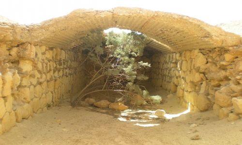 Zdjecie EGIPT / Pustynia El Alamain / okolice depresji Qattara / Drzewo w bunkrz
