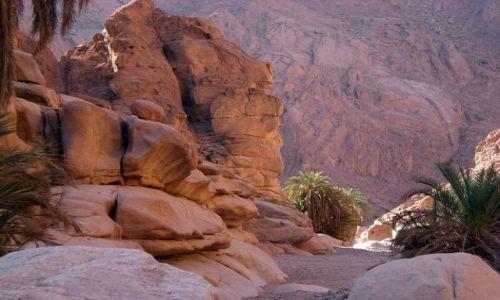 Zdjecie EGIPT / -Synaj południowy / Pustynia Synaj / Mała oaza