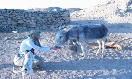 Zdjecie EGIPT / brak / Pustynia Zachodnia / wioska beduińska