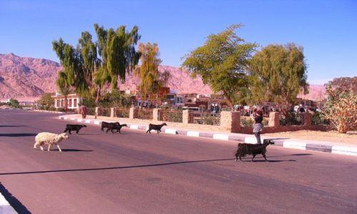 EGIPT / Półwysep Synaj / Nuwejba / ulica w Nuwejbie
