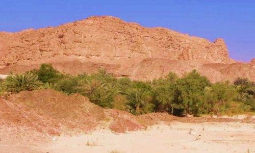 Zdjecie EGIPT / płw Synaj / Azja / oaza na pustyni
