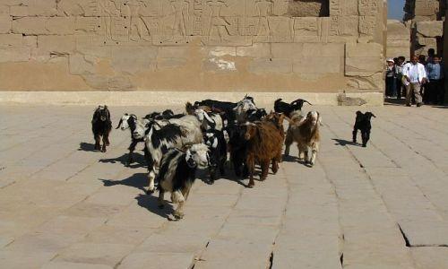Zdjecie EGIPT / Górny Egipt / Karnak /