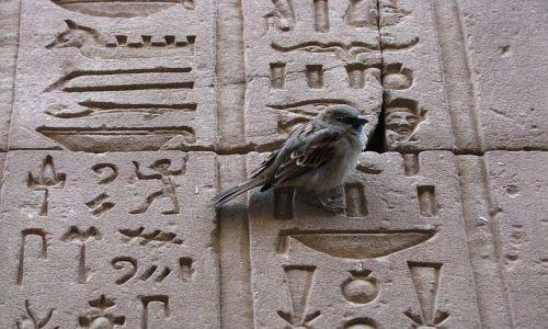 Zdjęcie EGIPT / Górny Egipt / Edfu / Świątynia Horusa