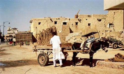 Zdjecie EGIPT / brak / Oaza Siwa / Oaza Siwa