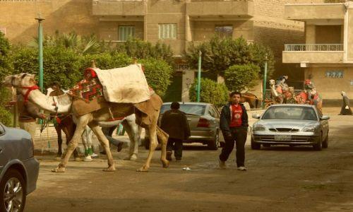 Zdjecie EGIPT / brak / kair / spacer
