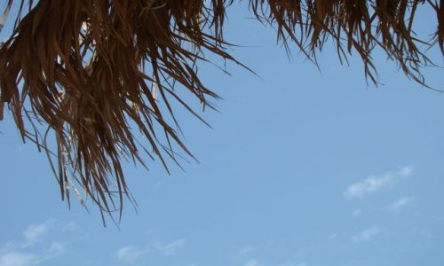 Zdjecie EGIPT / Pław. Synaj / Sharm el Sheik / Niebo i palma