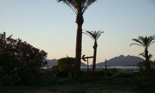 Zdjecie EGIPT / Pław. Synaj / Sharm el Sheik / Pobocze
