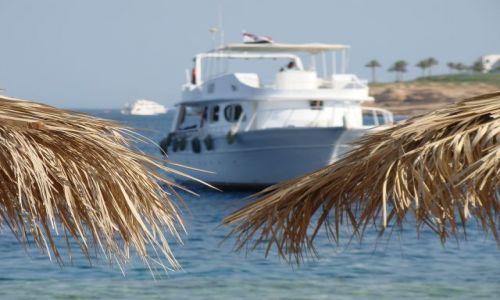 Zdjecie EGIPT / Pław. Synaj / Sharm el Sheik / Palmy i statek w tle