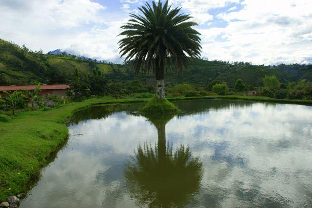 Zdjęcia: Iberra, Iberra, Samotna, EKWADOR