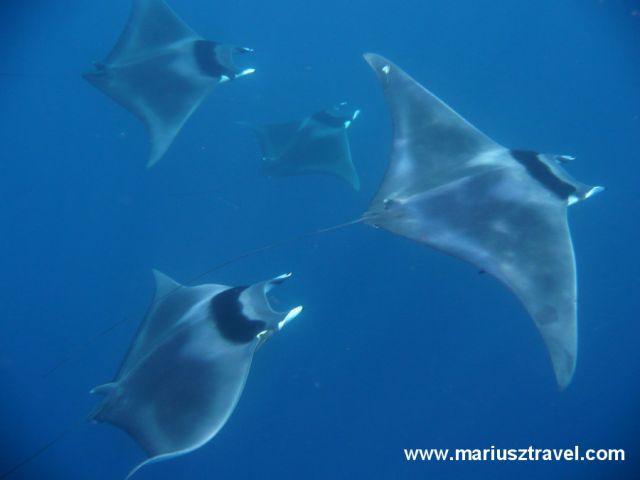 Zdjęcia: Galapagos, plaszczki, EKWADOR