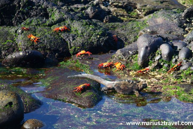 Zdj�cia: Galapagos, galapagos, EKWADOR