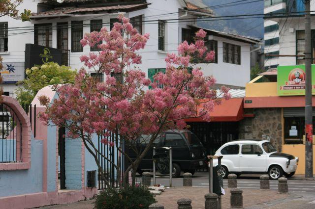 Zdjęcia: Kito, Widok z miejsca gdzie pomieszkiwałem, EKWADOR