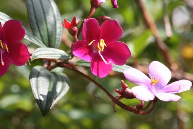 Zdjęcia: w drodze, kwiatek, EKWADOR