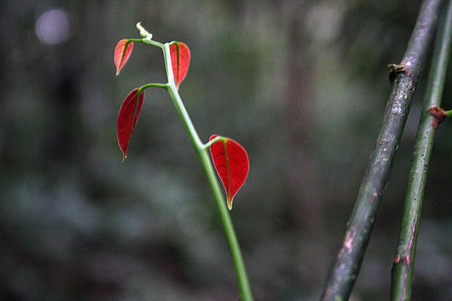 Zdjęcia: dżungla, rośnie sobie, EKWADOR