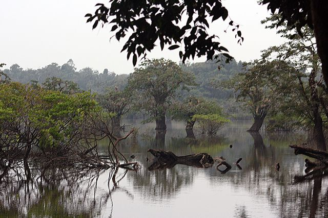 Zdjęcia: dżungla, cuyabano lodge, EKWADOR