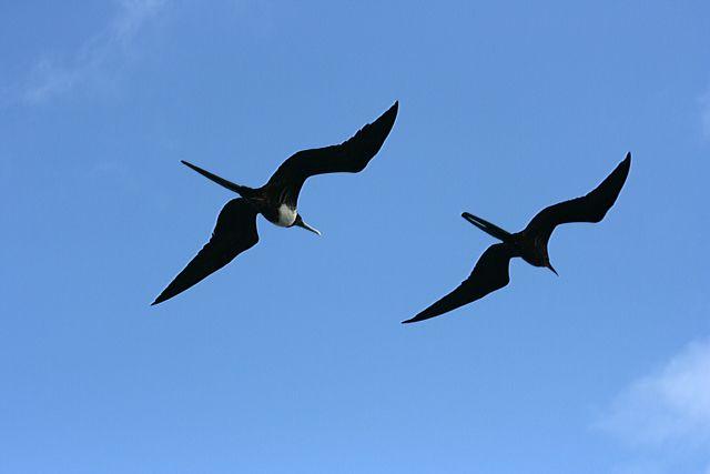 Zdjęcia: Galapagos, nalot, EKWADOR