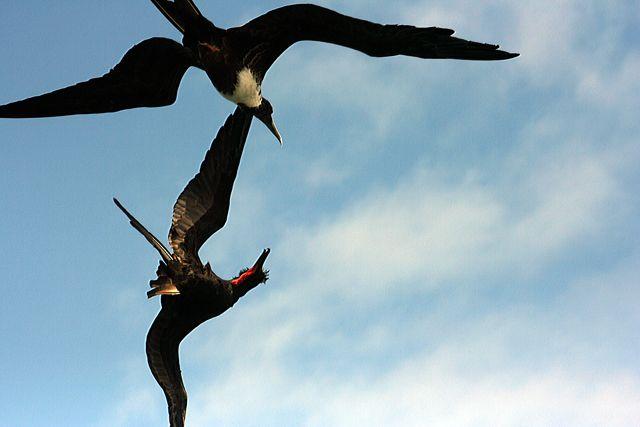 Zdjęcia: Galapagos, małe spięcie, EKWADOR