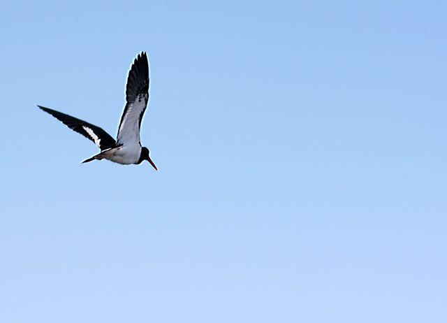 Zdjęcia: Galapagos, ptak, EKWADOR