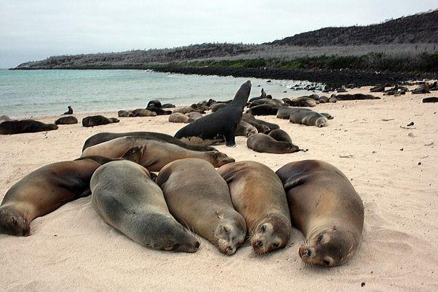 Zdjęcia: Galapagos, zasłużony odpoczynek po całym dniu leżenia, EKWADOR