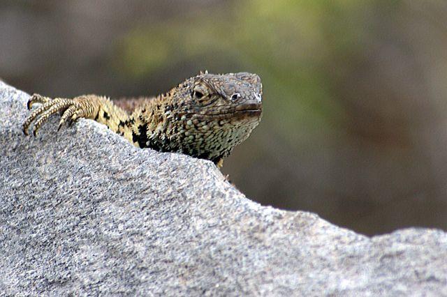 Zdjęcia: Galapagos, a kuku, EKWADOR