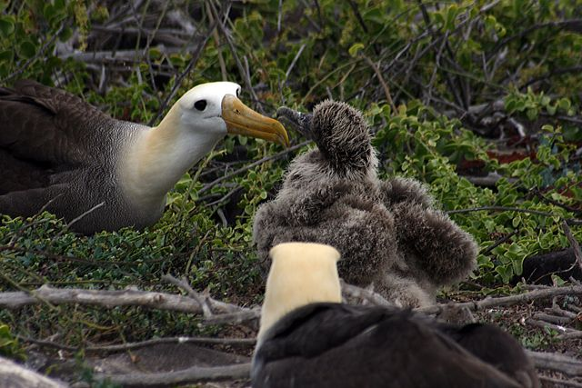 Zdjęcia: Galapagos, jeeeeeeść!!!!!!!!, EKWADOR