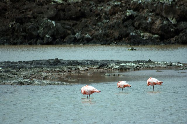Zdjęcia: Galapagos, kilka flamingów :(, EKWADOR