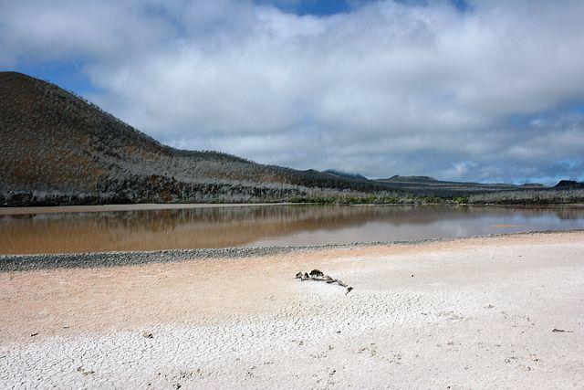 Zdj�cia: Galapagos, pla�a, EKWADOR