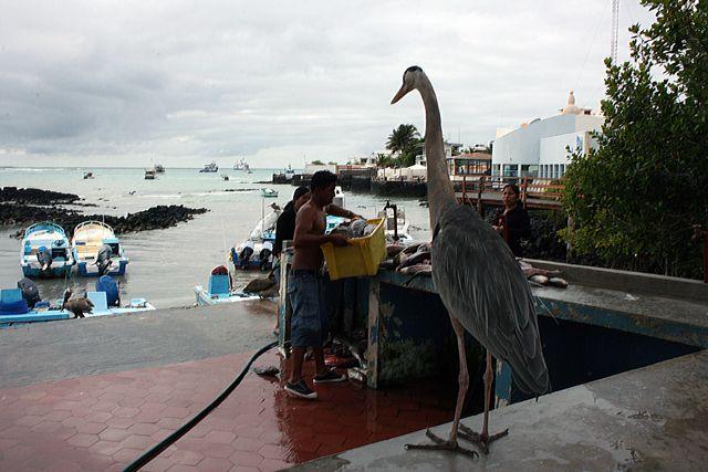 Zdjęcia: Galapagos, rybny przed zamknięciem, EKWADOR