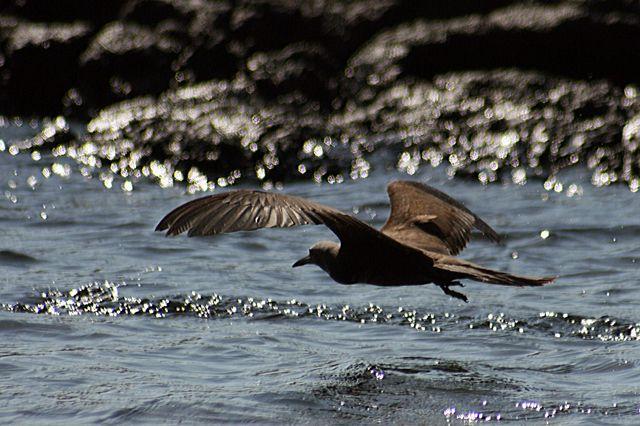 Zdjęcia: Galapagos, ptak , EKWADOR