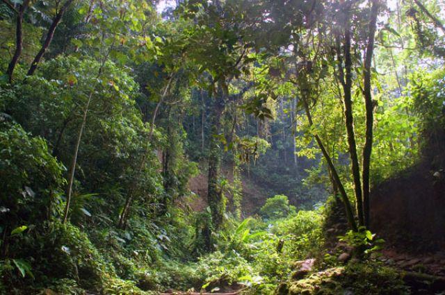 Zdj�cia: BANOS, W dzungli nr.2, EKWADOR