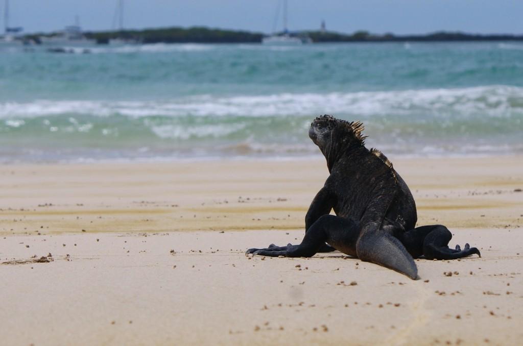 Zdjęcia: Wyspy Galapagos, Wyspy Galapagos, to moja plaża, EKWADOR