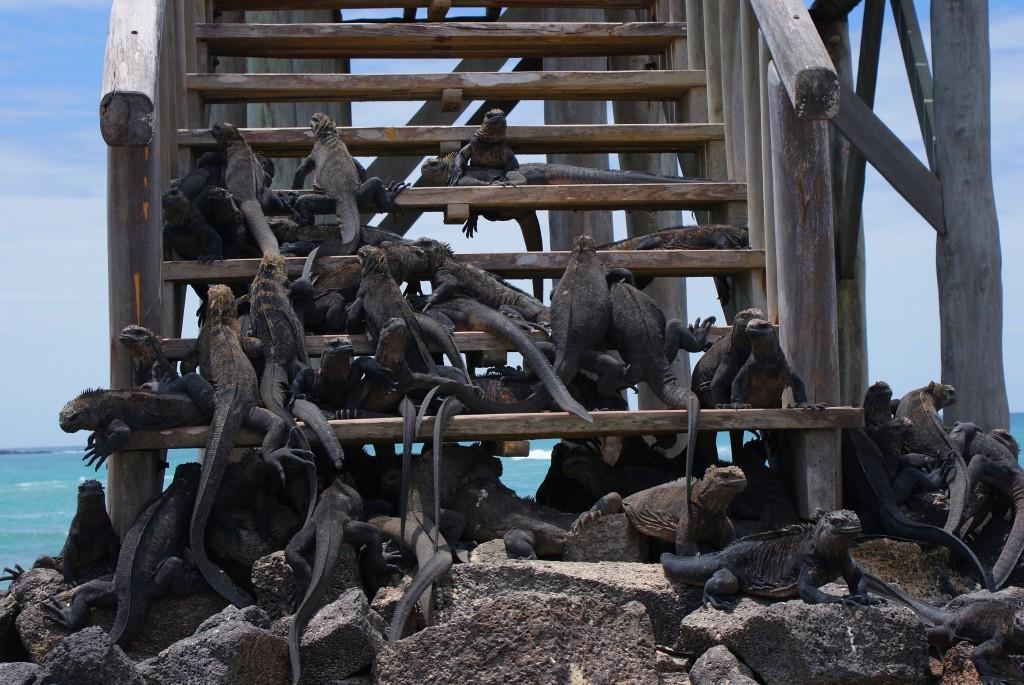 Zdjęcia: Wyspy Galapagos, Wyspy Galapagos, wygrzewamy się, EKWADOR