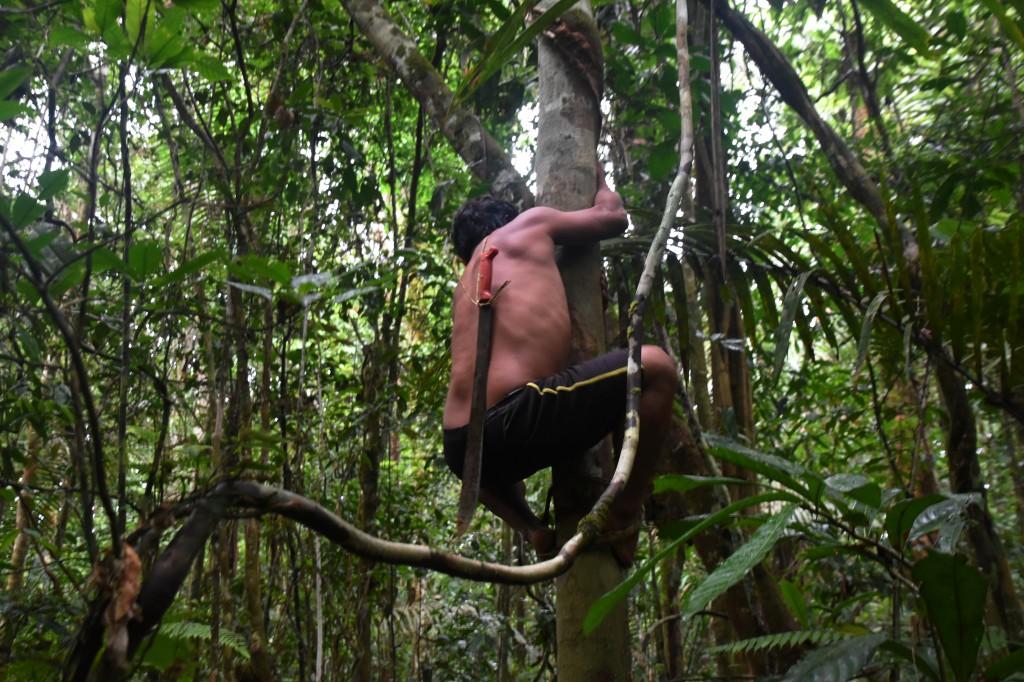 Zdjęcia: lasy deszczowe, Amazonia, Jak łatwo jest wejść na drzewo, EKWADOR