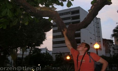 Zdjecie EKWADOR / - / Guayaquil / iguana park