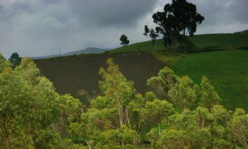 Zdjecie EKWADOR / Riobamba / Riobamba / Zaorane