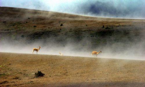 Zdjęcie EKWADOR / Chimburozo / Chimburozo / Pastwisko