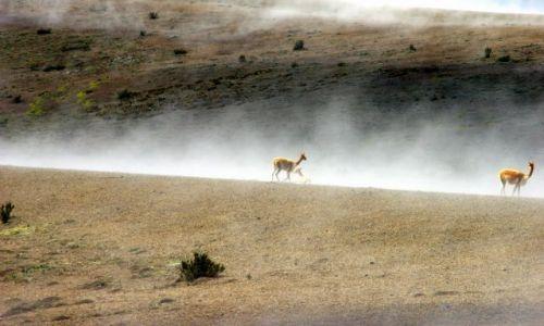 Zdjęcie EKWADOR / Chimburozo / Chimburozo / we mgle