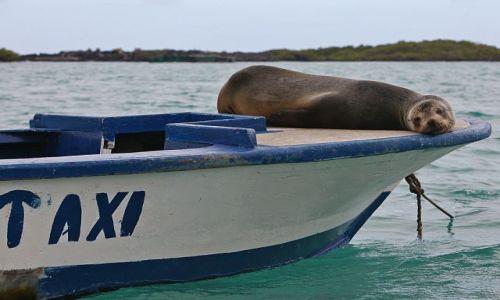Zdjecie EKWADOR / Galapagos / Puerto Ayora / Water Taxi