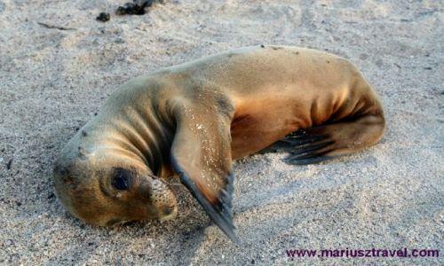 Zdjęcie EKWADOR / brak / Galapagos / galapagos