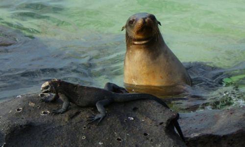 Zdjecie EKWADOR / Wyspy Galapagos / Wyspy Galapagos / przyjaciele