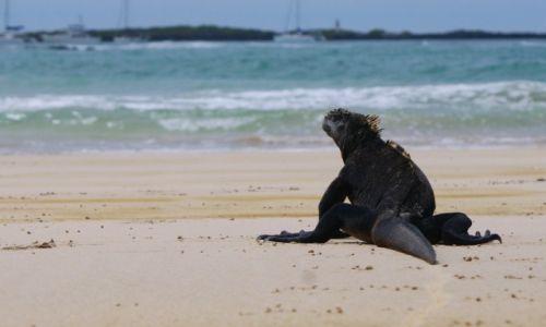 Zdjecie EKWADOR / Wyspy Galapagos / Wyspy Galapagos / to moja plaża