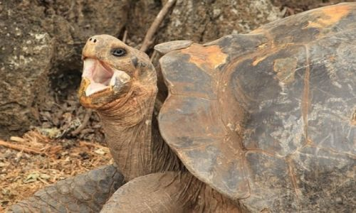 Zdjecie EKWADOR / Galapagos / Galapagos / Ziewanie