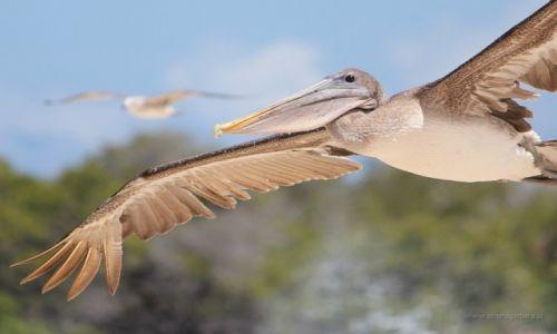 Zdjęcie EKWADOR / Galapagos / Galapagos / W locie