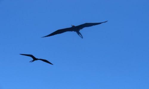 Zdjęcie EKWADOR / Galapagos / Galapagos / Gdzie by tutaj wylądować!