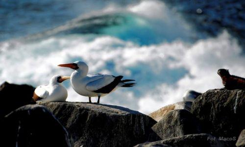 Zdjęcie EKWADOR / Galapagos / Española / z falami w tle