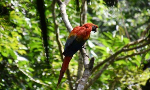 Zdjecie EKWADOR / Amazonia / lasy deszczowe / Papużka