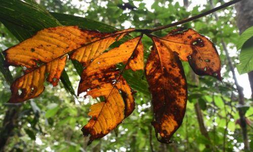 Zdjecie EKWADOR / Amazonia / lasy deszczowe / Jesień w dżungli?