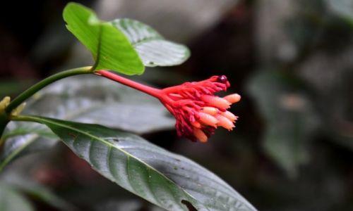 Zdjecie EKWADOR / Amazonia / lasy deszczowe / Ciekawy kwiatek