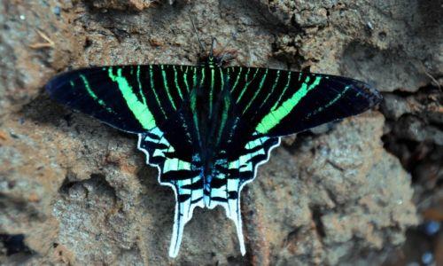 Zdjecie EKWADOR / Amazonia / lasy deszczowe / Jeszce jeden ładny motylek