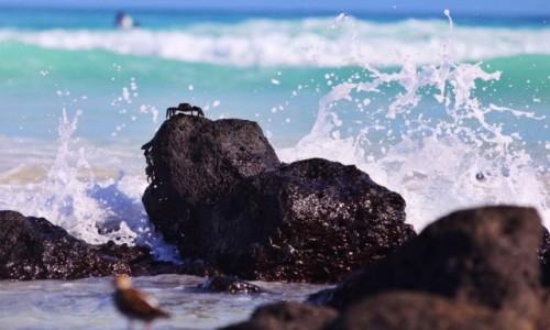 Zdjecie EKWADOR / Galapagos / Isla Isabela / Gniew Oceanu:)